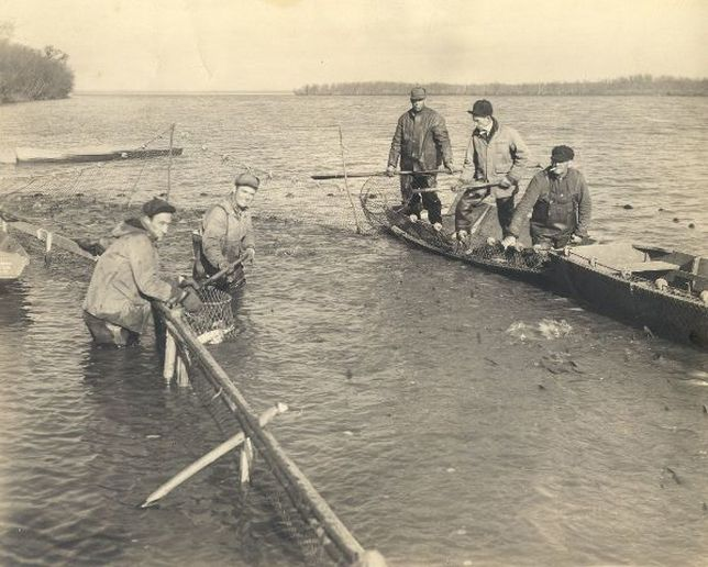 Historic photo of commercial fishermen pulling nets